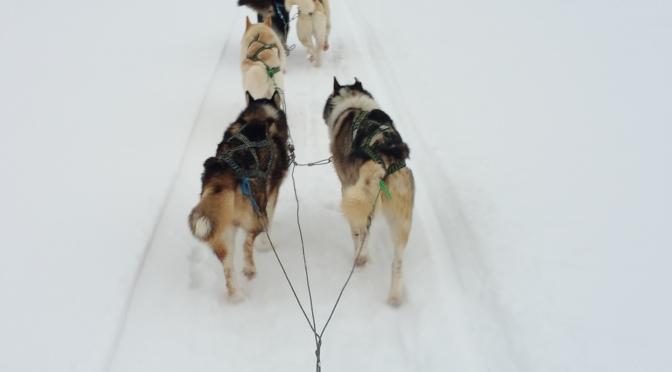 Parc national d'Hossa, semaine d'activités avec des chiens polaires, du 5 au 11 mars
